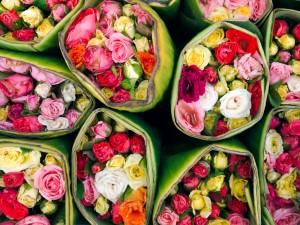 Fleurs: roses
