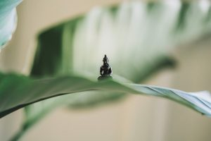 yoga: figurine de bouddha